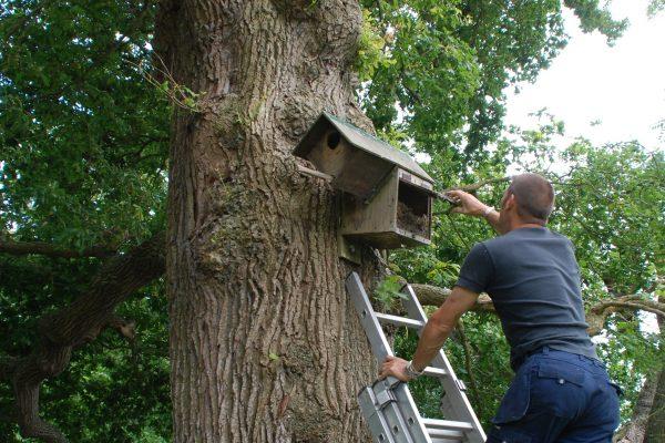 Hanging Little Owl Box
