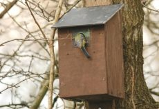 Tree Hanging Bird box