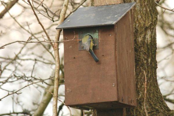 Tree Hanging Bird box