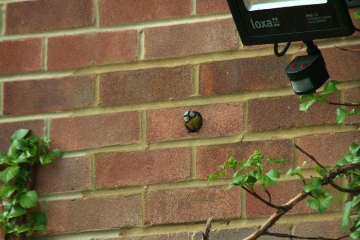 Brick matched integral bird nesting box